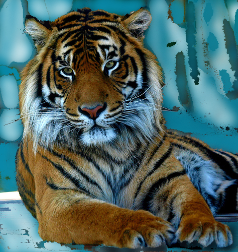 Tiger (abstract icescape)